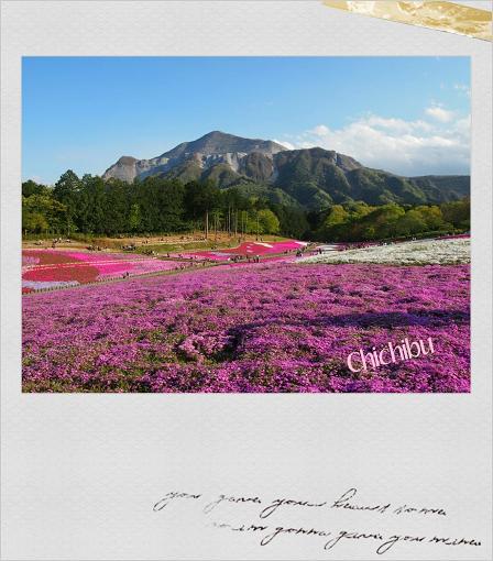 芝桜.png